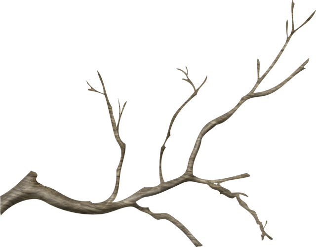 Wood branch png. Miscellaneous treebranchpng