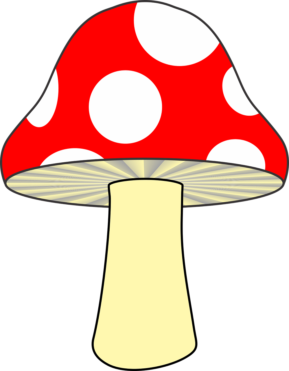 Fungus drawing nature. Forest mushroom red woods