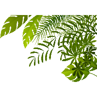 Woods clipart jangle. Download jungle free png