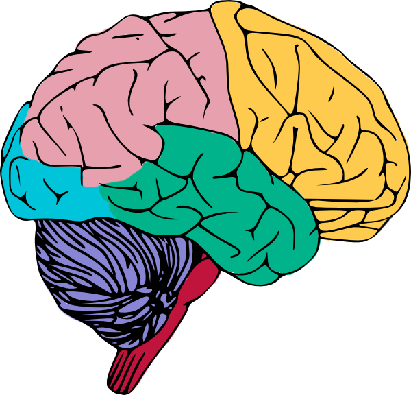 Working vector human brain. Collection of free demeanure
