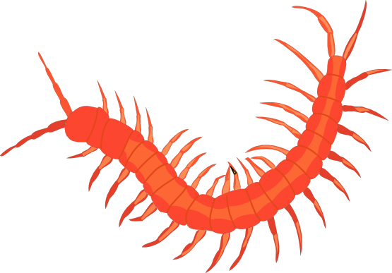 Clipartist net pxpng k. Worm clipart centipede free library