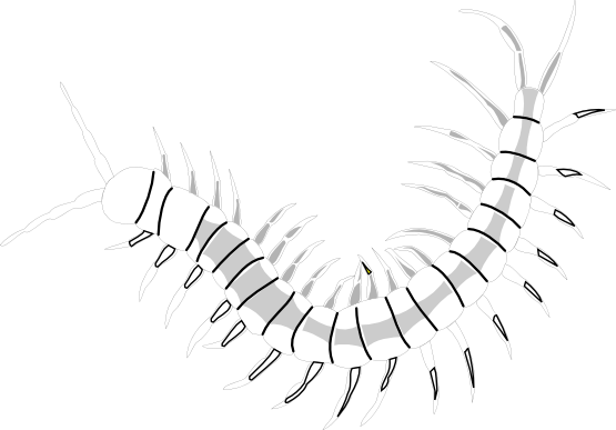 Clipartist net black white. Worm clipart centipede png free