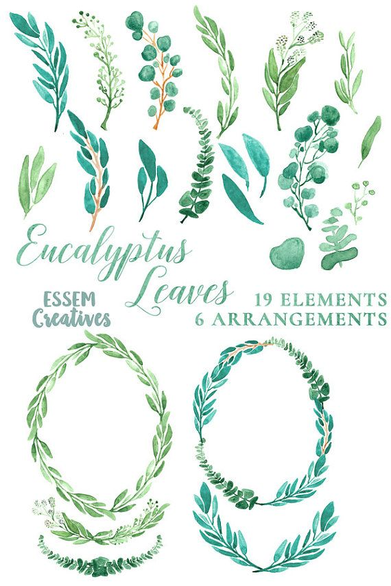 Wreath clipart teal. Eucalyptus watercolor leaves leaf
