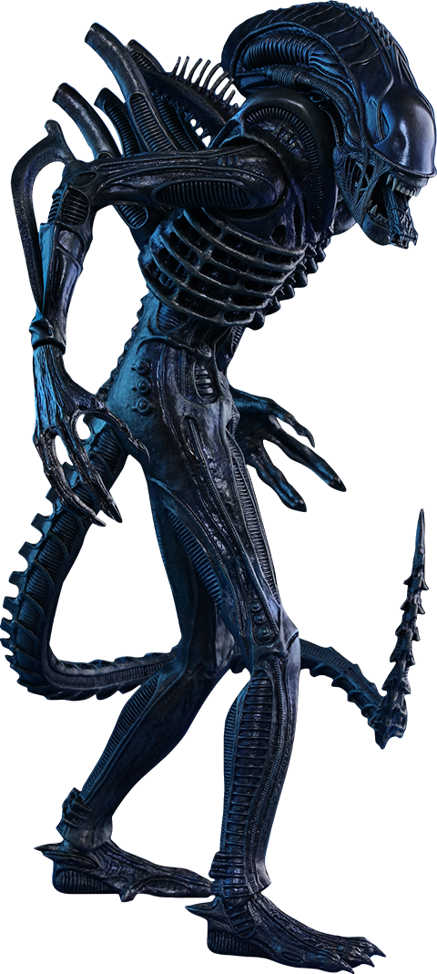 Xenomorph transparent side. Aliens alien warrior sixth