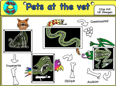 xray clipart animal xray