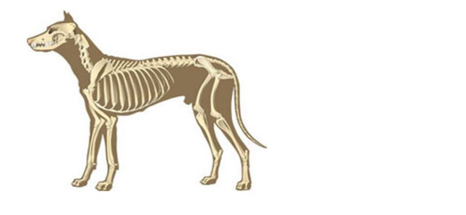 Xray clipart pet. Lvac homepage