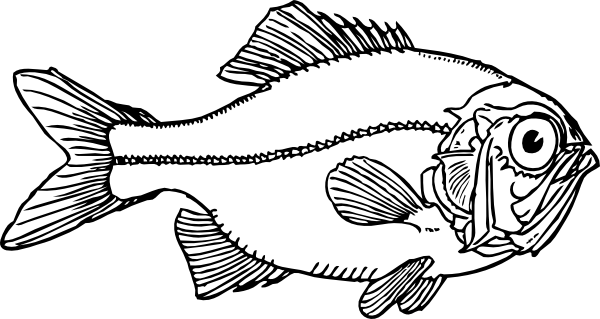 Xray drawing fish. X ray graphic