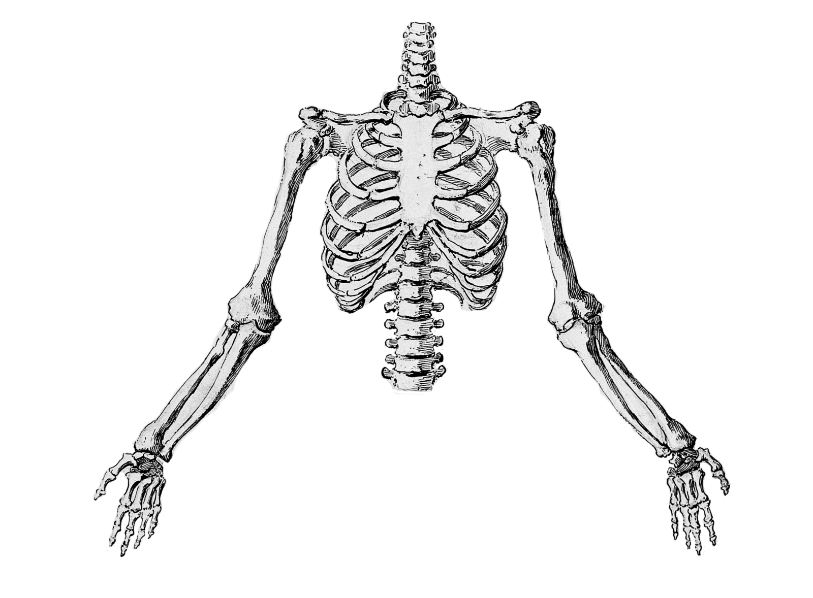 Xray drawing little. The bizarre convergence of