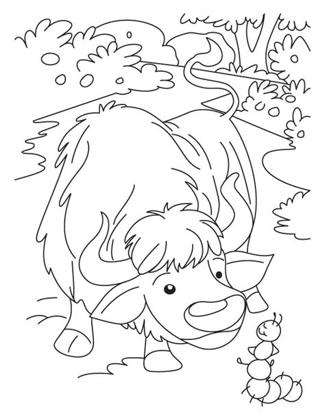 Yak clipart colouring page. Collection of printable coloring