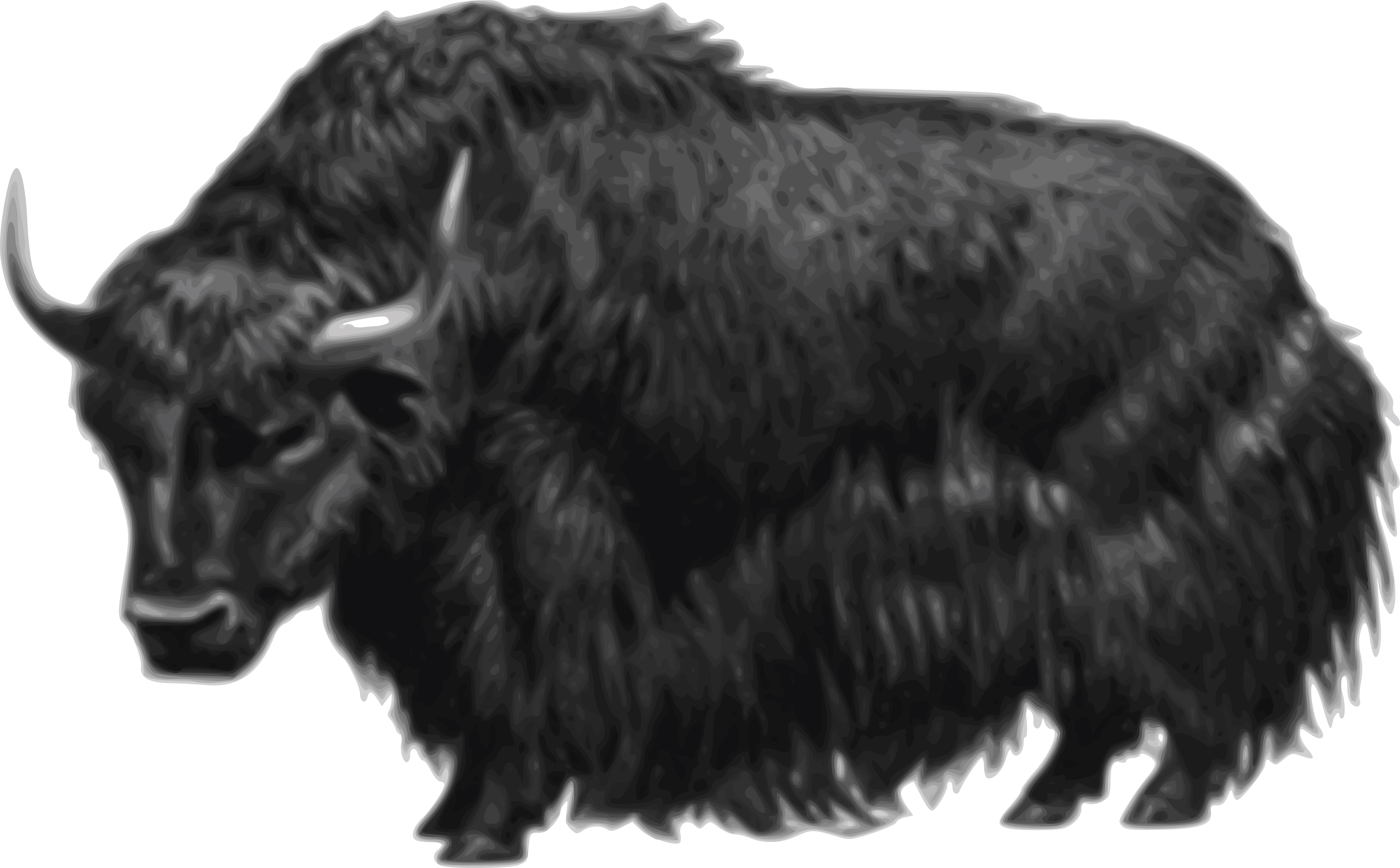 Yak clipart outline. Black and white
