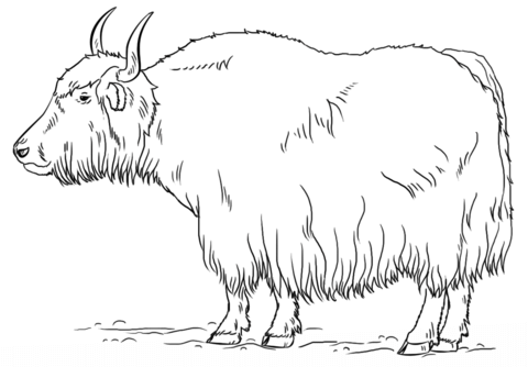 Yak clipart outline. Coloring page free printable