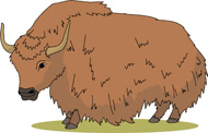 Yak clipart yack. Search results for clip