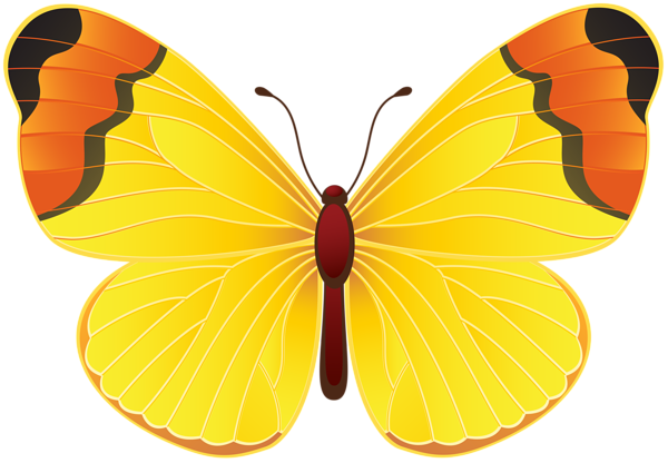 Yellow butterfly png. Clip art transparent image