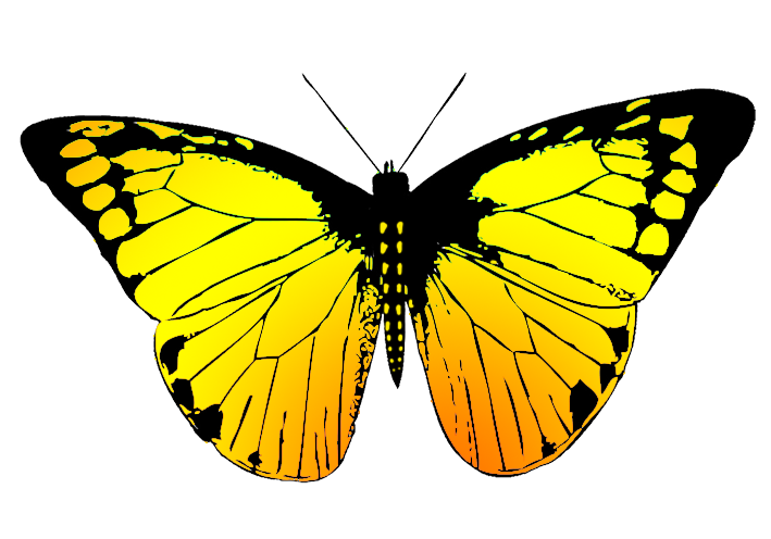 Yellow butterfly png. Clipart with many colors