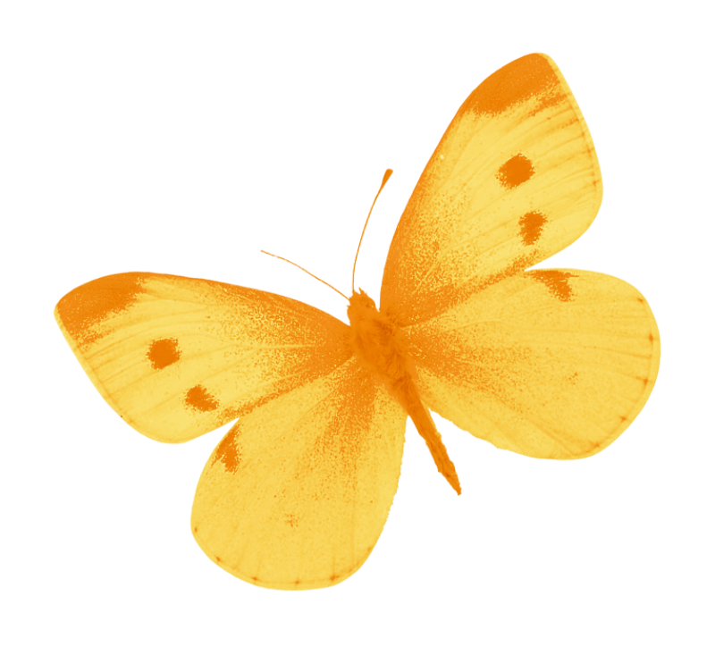 Yellow butterfly png. By heemipetal on deviantart