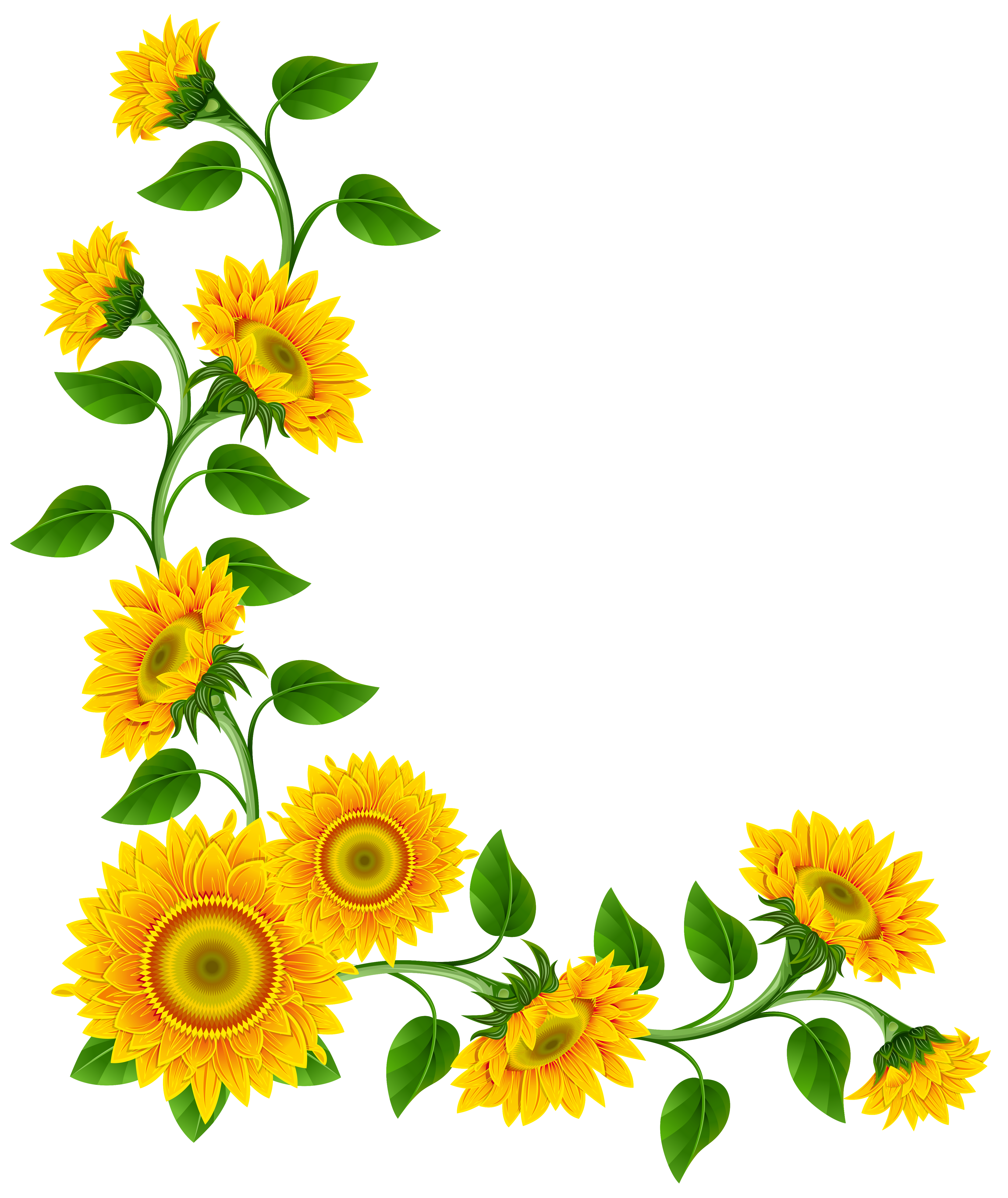 Yellow flower border png. Sunflower decoration clipart image