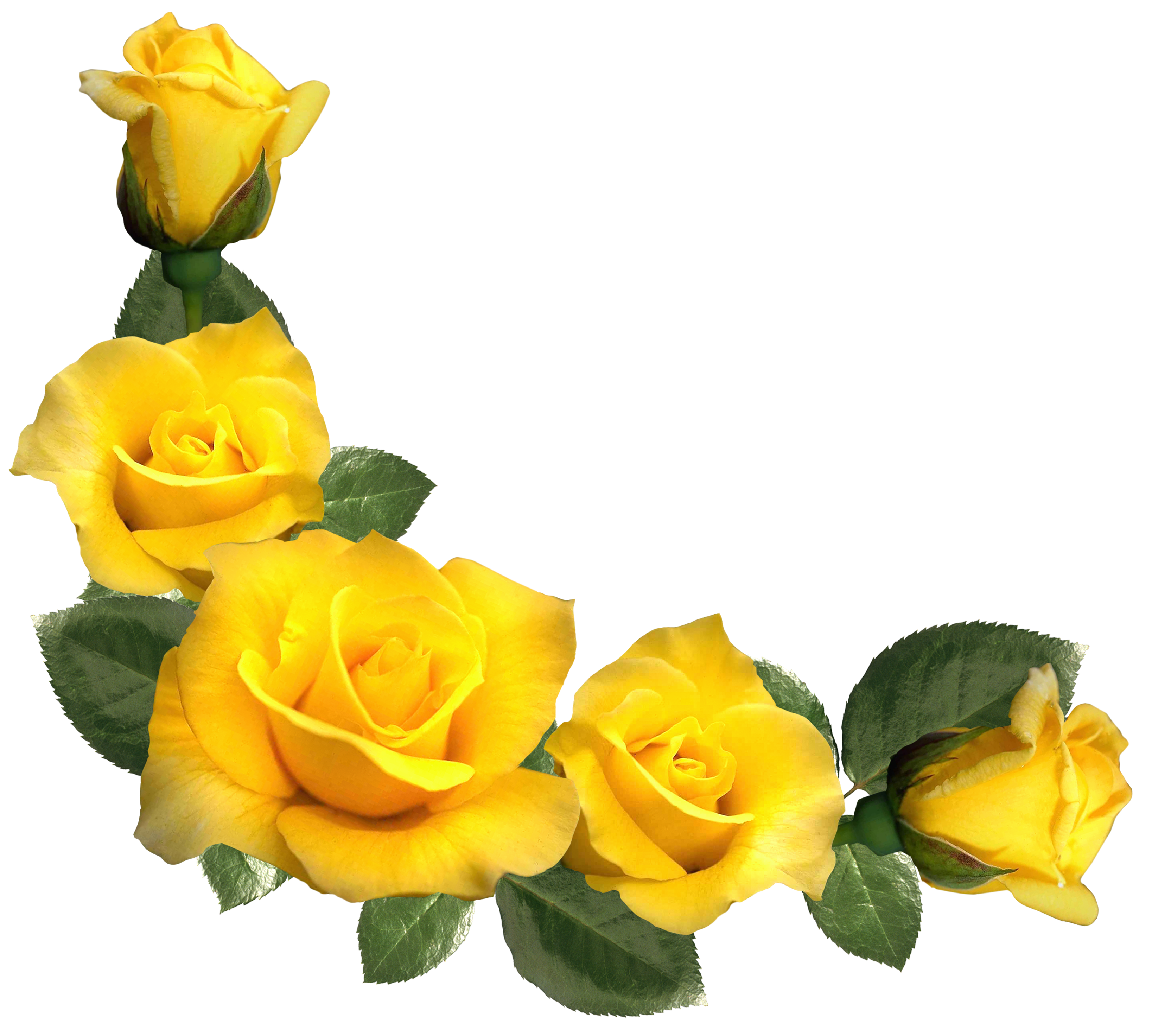 Beautiful decor clipart image. Yellow roses png clip art black and white stock