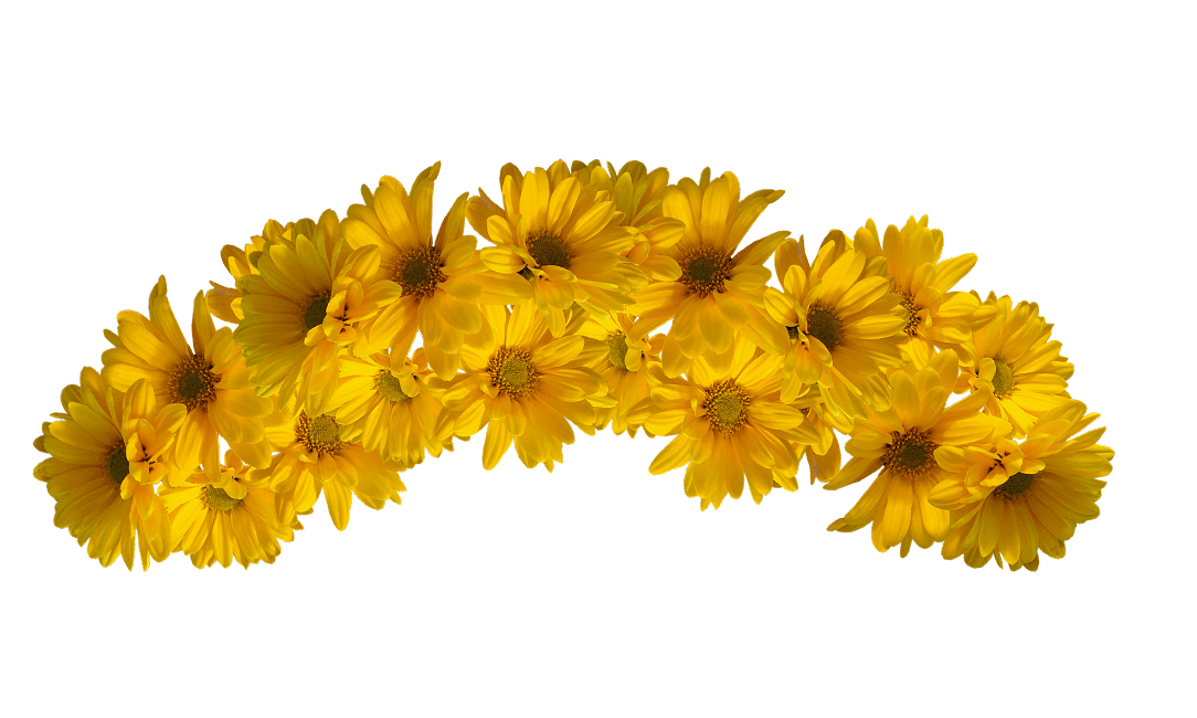 Yellow flower crown png. Flowers ideas for review