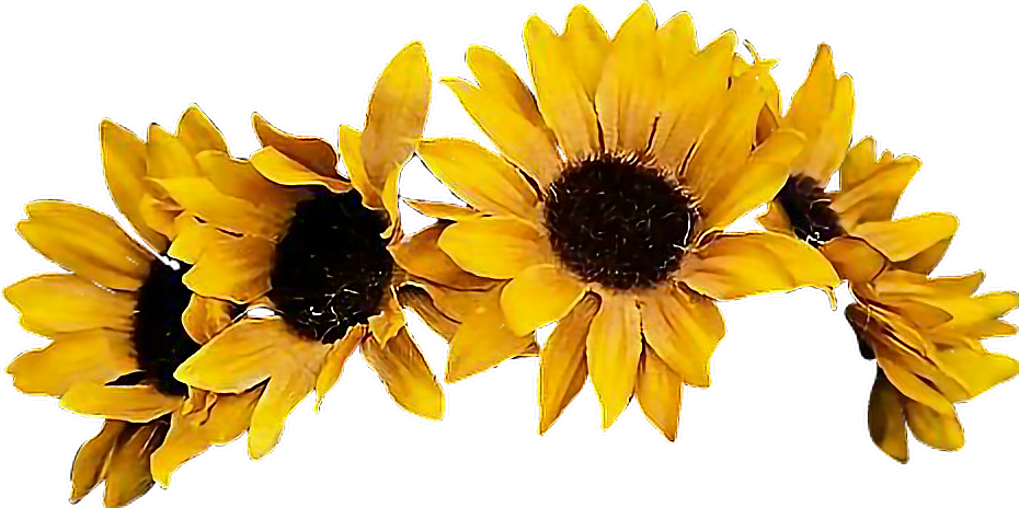 Yellow flower crown png. Sunflower flowercrown coronadeflores flowers
