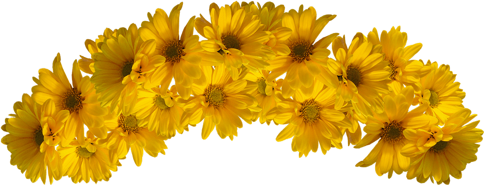 Yellow flower crown png. Download hd transparent x