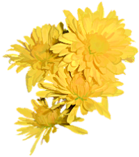 Yellow flowers png. Index of users tbalze