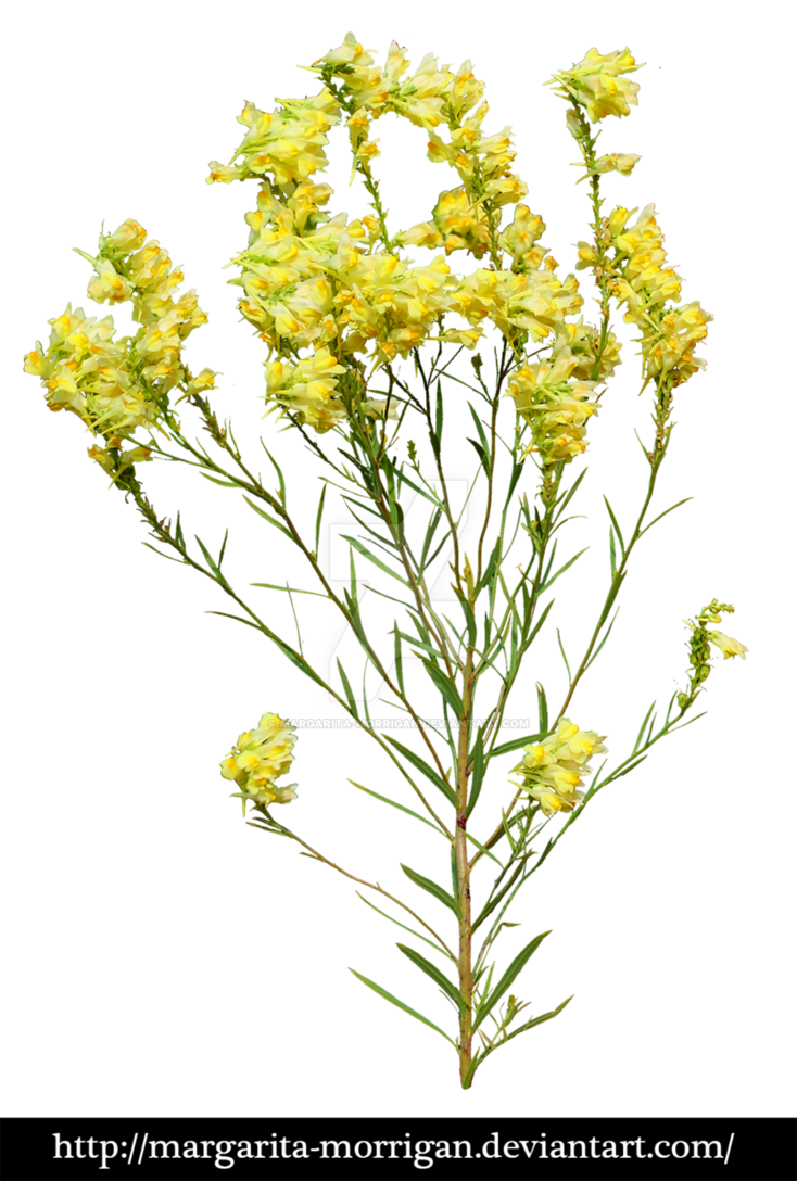 Yellow flowers png. By margarita morrigan on