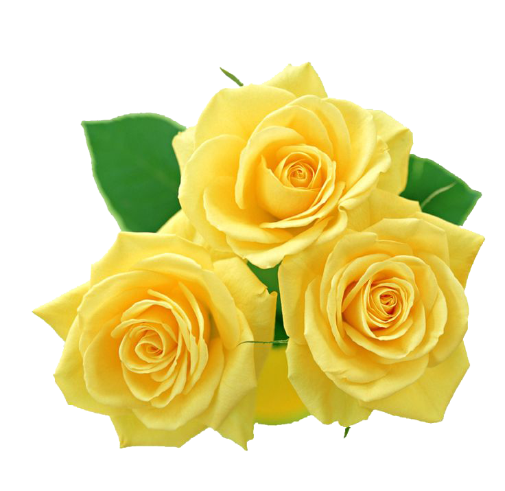 Yellow flowers png. Bouquet images transparent free