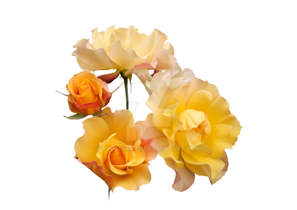 Yellow roses png. By prussiaart on deviantart jpg black and white library