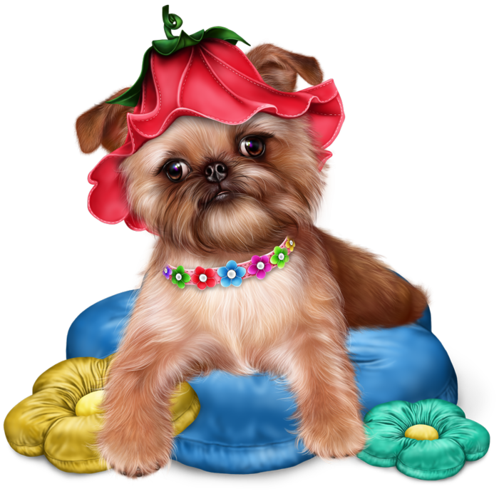 brussels griffon puppy. Yorkie clipart transparent download
