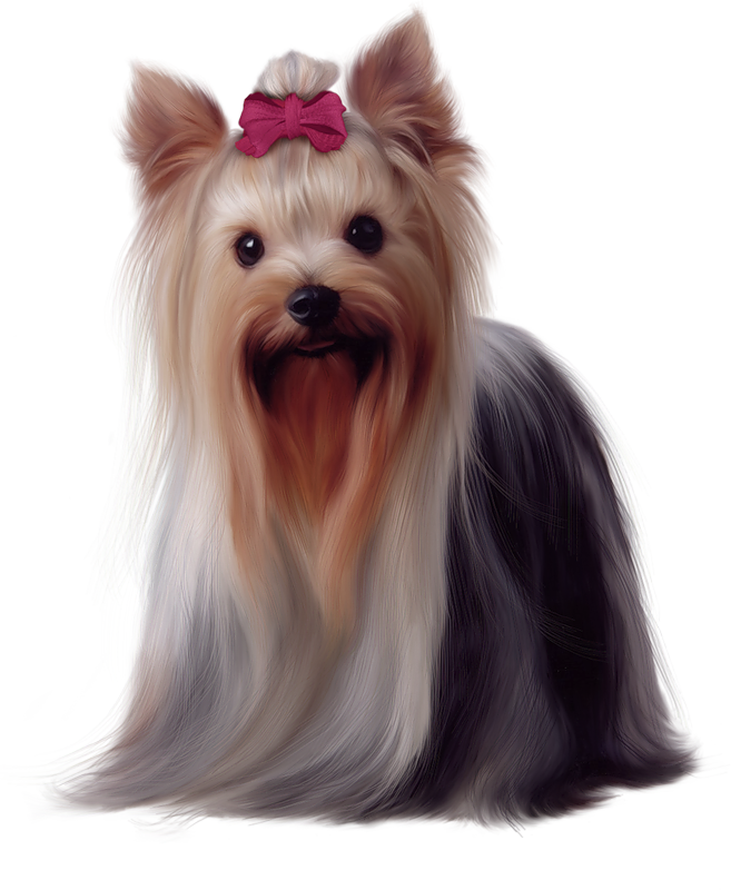 Yorkie clipart birthday. Painted yorkshire terrier png