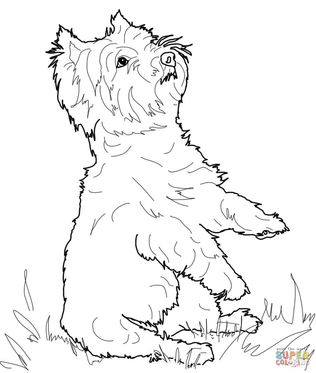 Yorkie clipart cairn terrier. Exploit coloring pages yorkshire