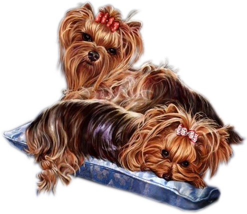 Yorkie clipart birthday. Free cliparts download clip