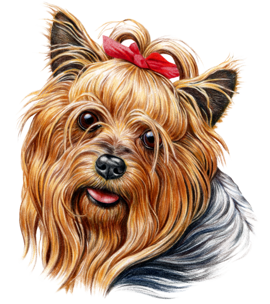 Yorkie clipart head. Dog fabric yorkshire terrier