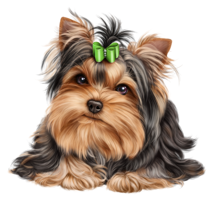 Yorkie clipart pet. Chien chiot dog animal