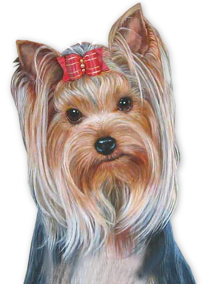 Poodle clip terrier. Dogs tubes yorkie art