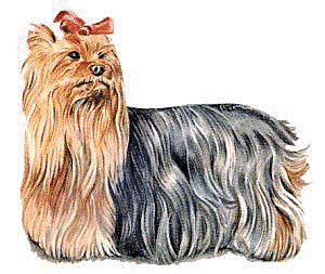 Yorkie clipart silky terrier. Yorkshire animals dogs y