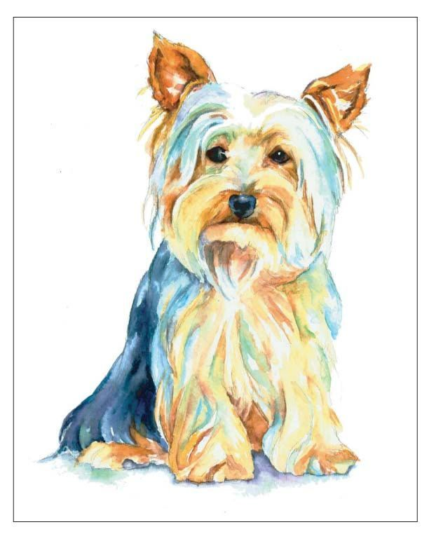 Yorkie clipart silky terrier. Yorkies watercolor pencil and