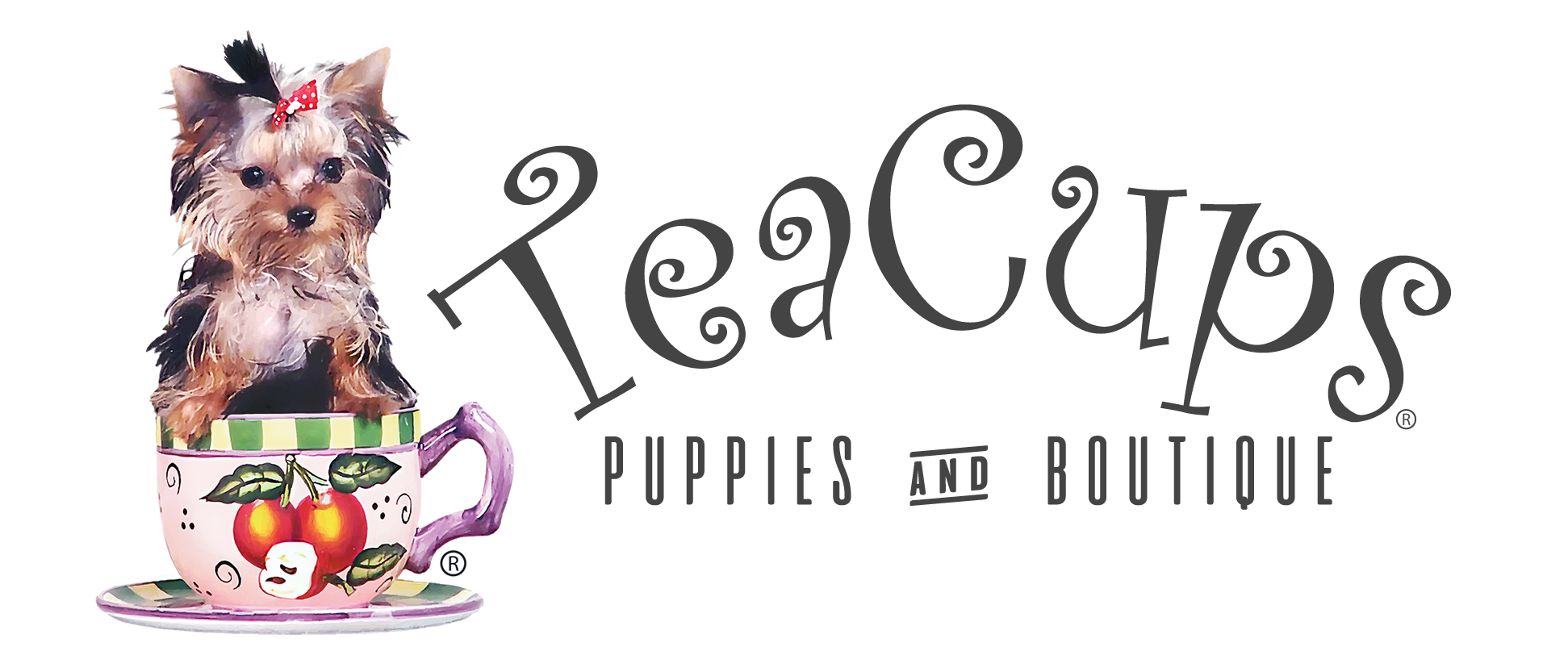 Yorkie clipart teacup yorkie. Teacups puppies boutique dogs