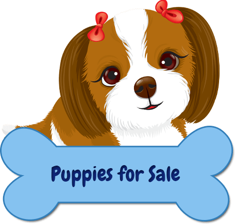 Yorkie clipart teacup yorkie. Beautiful puppy grooming salon