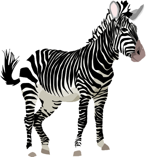 zebra transparent