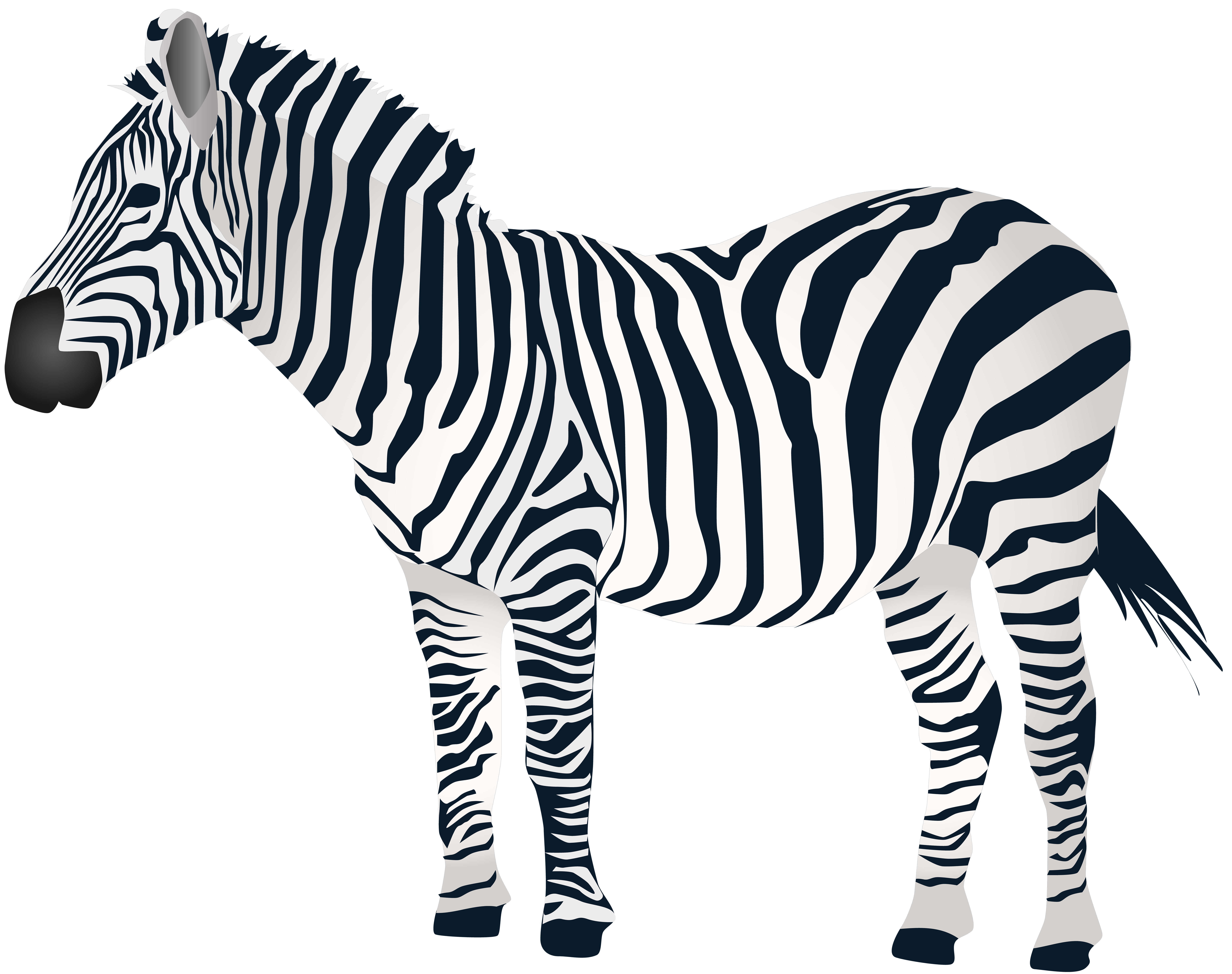 Animals .png. Zebra clipart at getdrawings
