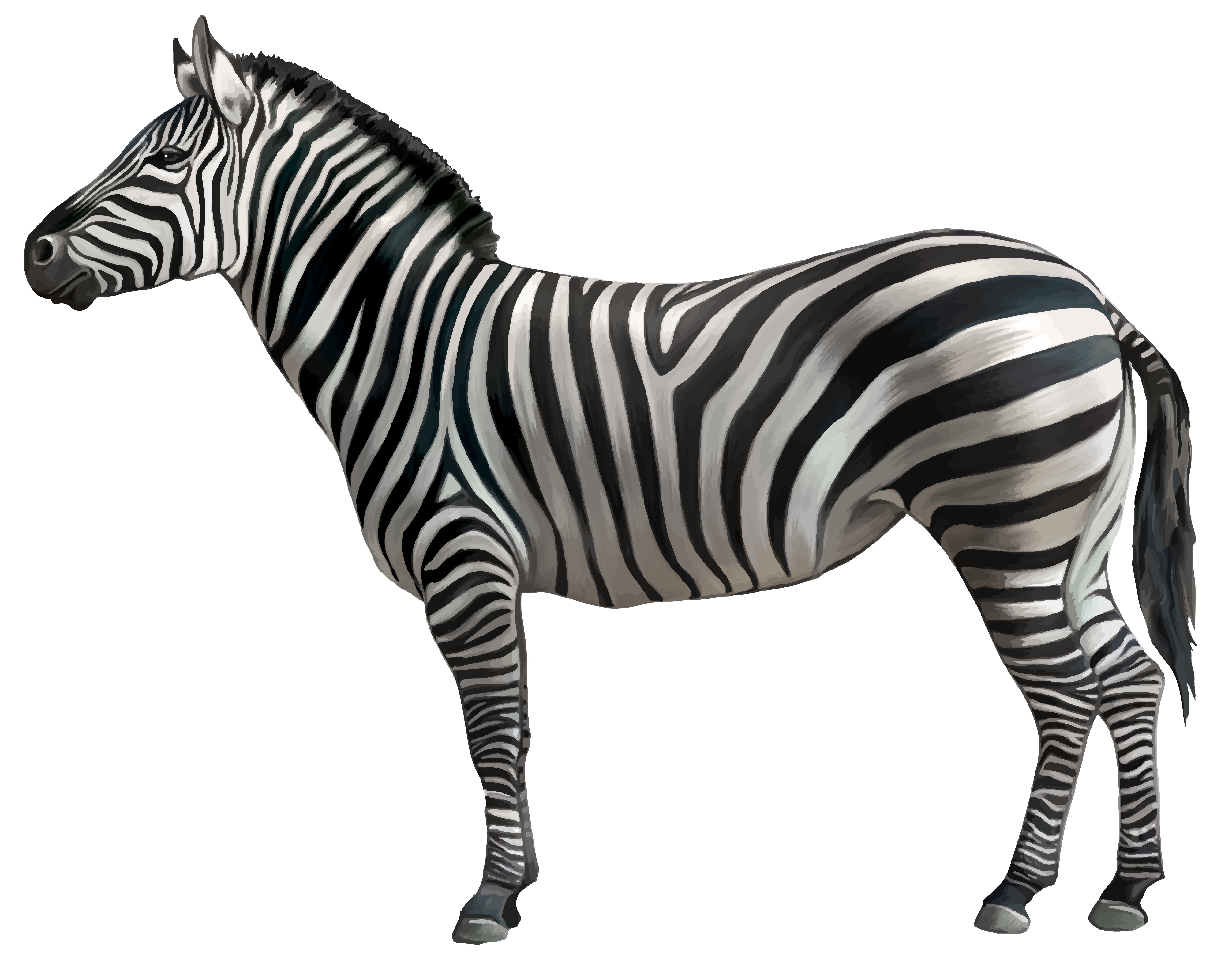 Zebra border png. Clipart image gallery yopriceville