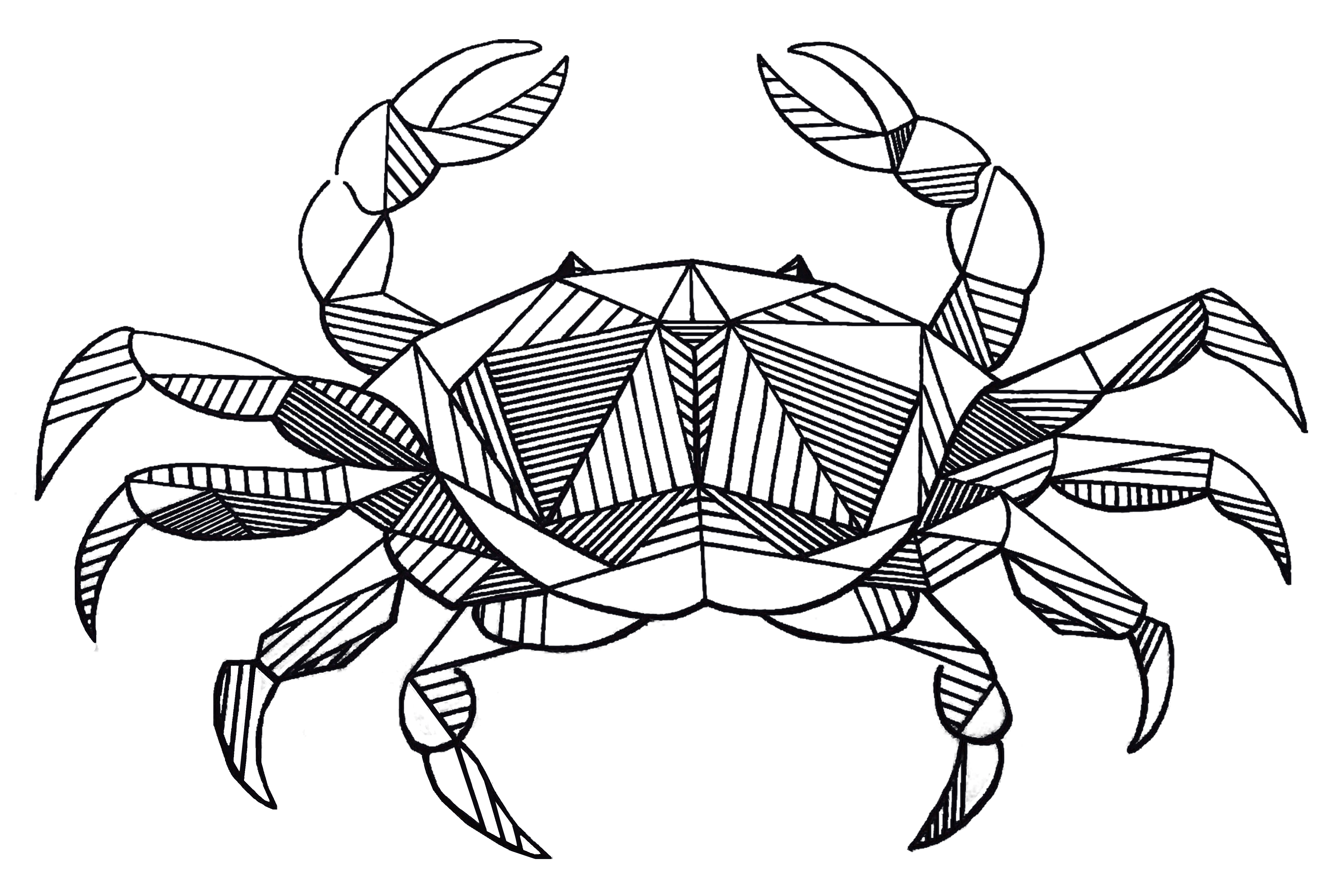 Crabs drawing ink. Chesapeake blue crab cancer