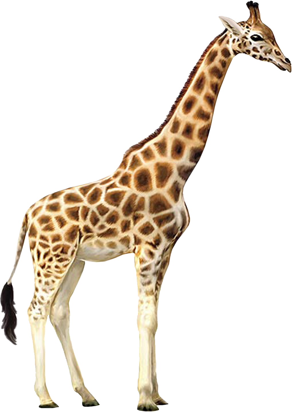 Animals .png. Png free images giraffe