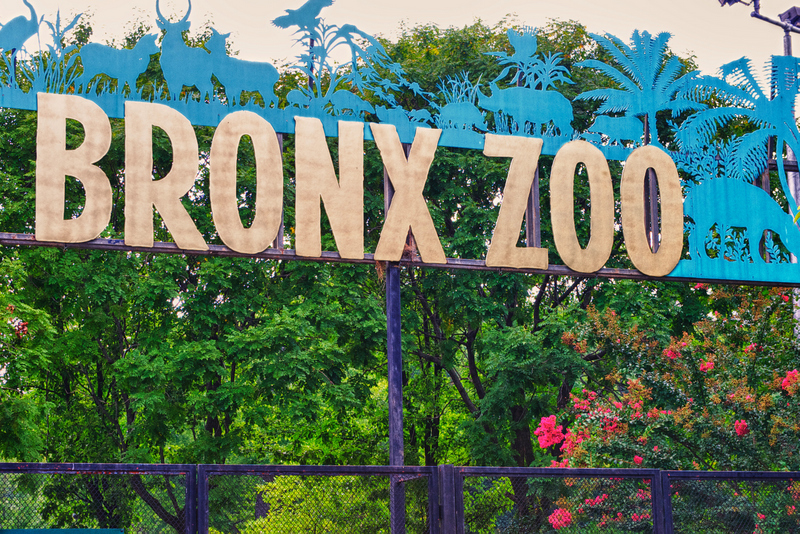 Zoo clipart bronx zoo. The top secrets of