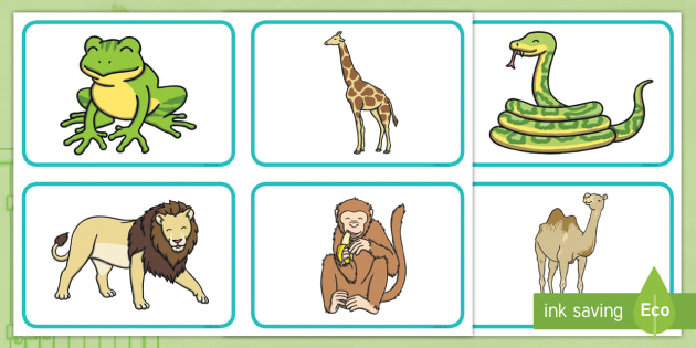 Zoo clipart dear zoo. Animal picture cards rod