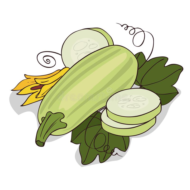 Zucchini clipart small. Isolate courgette or stock library
