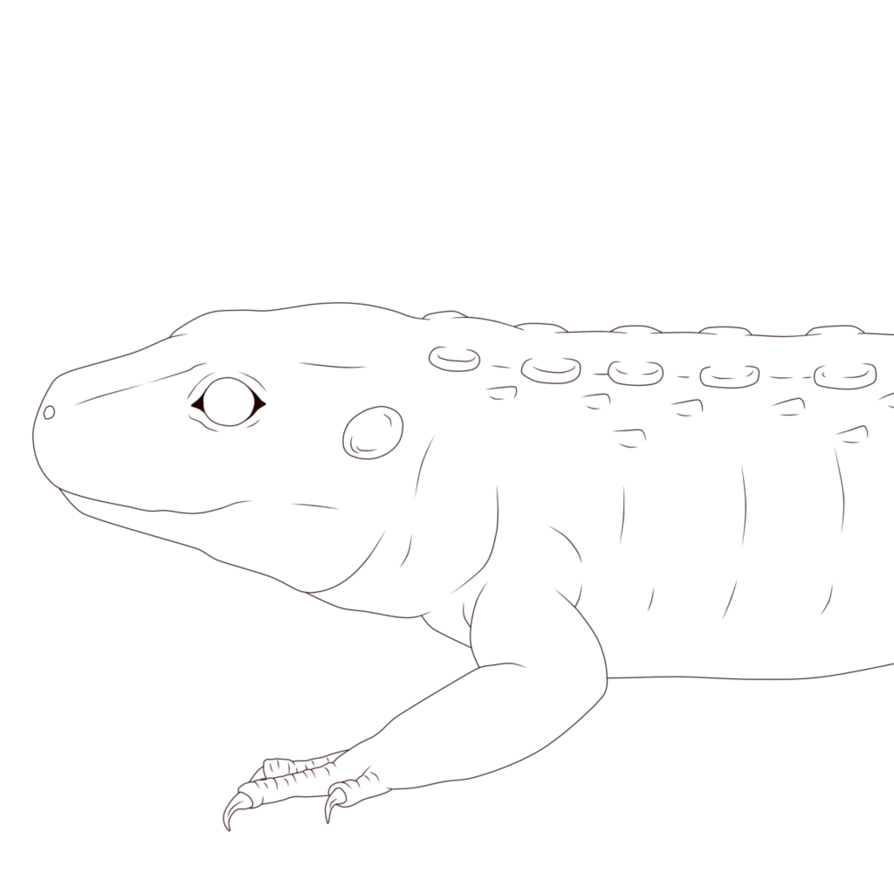 Zuko drawing. Lineart caiman lizard by