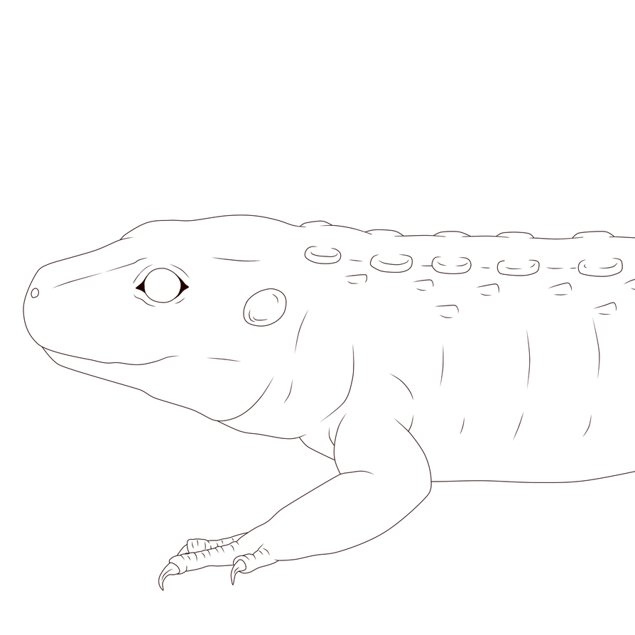 Zuko drawing sketch. Lineart caiman lizard by